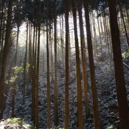 1月の東條山